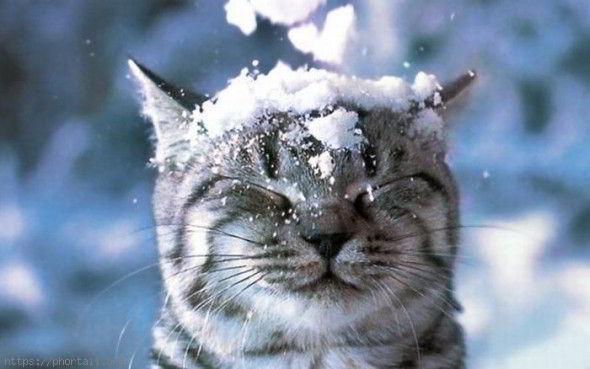 image de chat dans la neige