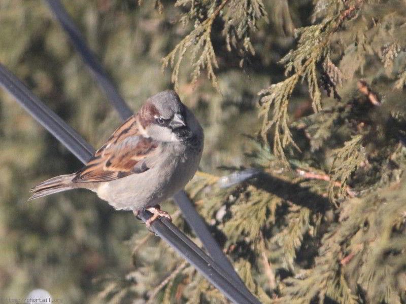Les oiseaux de nos jardins photo histoires dr les blague du jour - Natagora oiseaux de nos jardins ...