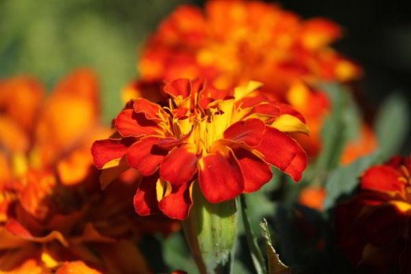 Fleur orange blague du jour for Bouquet de fleurs orange et jaune