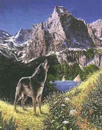 Illusion d 39 optique cinq loups dans la montagne blague du for Dans cette optique